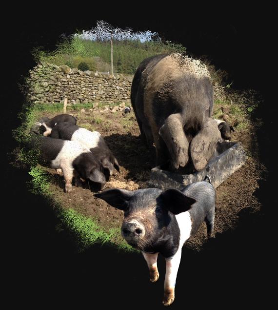 Wendy&Piglets